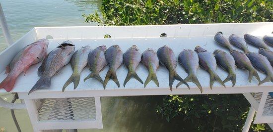 Miami native