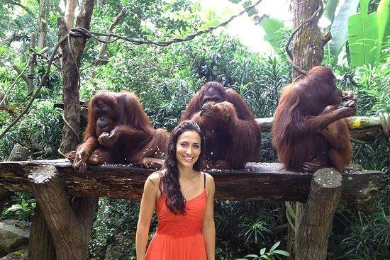 Singapore Zoo med transport og...
