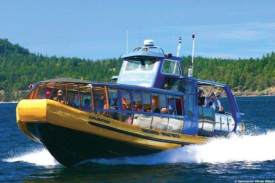 从温哥华出发观赏鲸鱼之旅