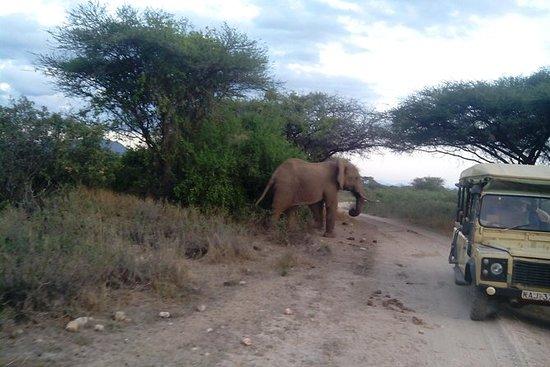 来自内罗毕的12天肯尼亚和坦桑尼亚野生动物园