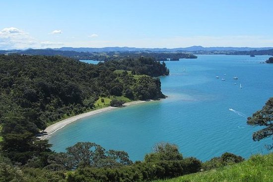 Matakana Coast and Country Tour