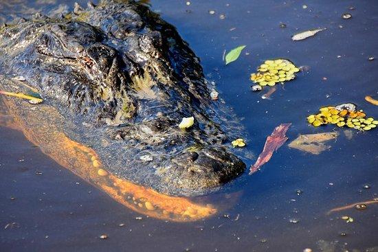 New Orleans Ghost og Gators Combo Tour