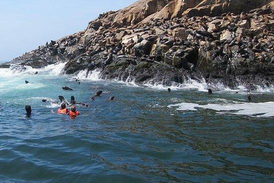 利马的帕洛米诺群岛游船和海狮游泳体验