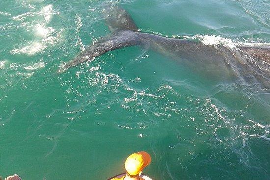 Avistamiento de ballenas desde...