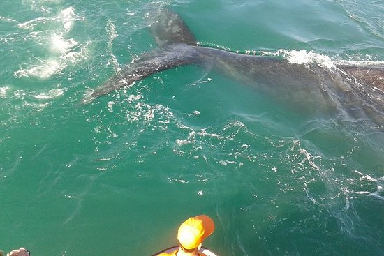 Walvissen spotten vanuit Hermanus