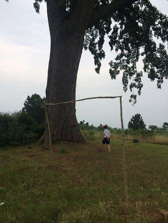 Kihihi, Уганда: Nature walk to Banyabutumbi Magic tree