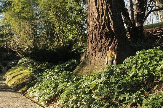 圣塞巴斯蒂安的隐藏公园和宫殿漫步