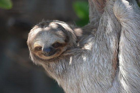 Monkey & Sloth Park plus Iguana...