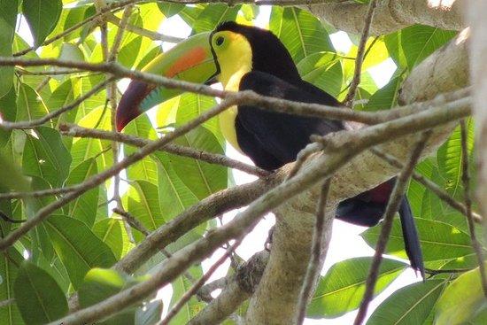 ティカル国立公園でのグアテマラバードウォッチングツアー