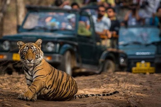Golden Triangle Tour med Ranthambore