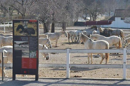 波多羅茲從波多羅茲半天前往世界著名的種馬場Lipica