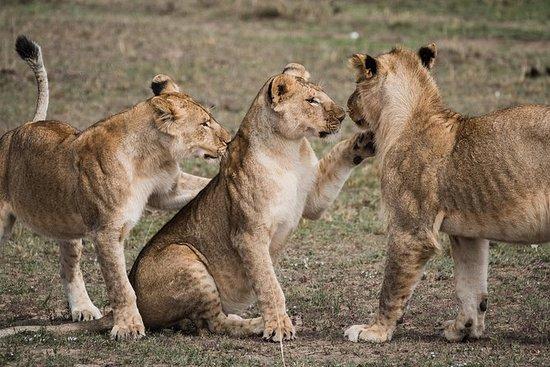 Safari in Tsavo East National Park