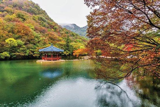 Naejangsan Maple Leaf Tour