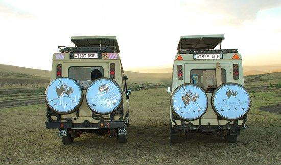 Katikati Tours and Safaris