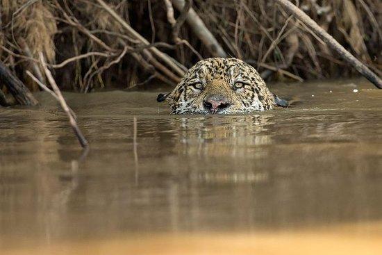 巴西野生动物之旅