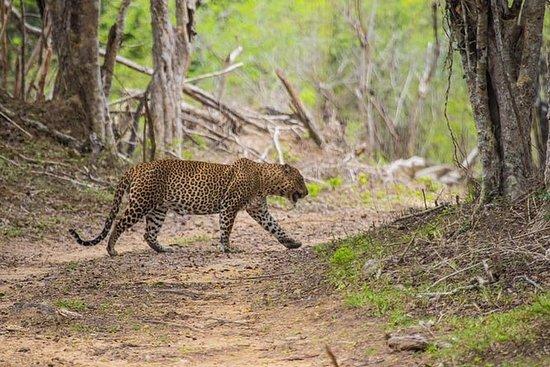 Kumana National Park Hele dagen safari