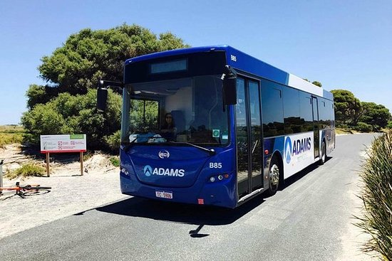 Rottnest Island Bayseeker Day Trip from Perth with Transfer