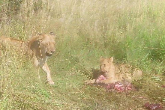 Salidas diarias 3 días masai mara.