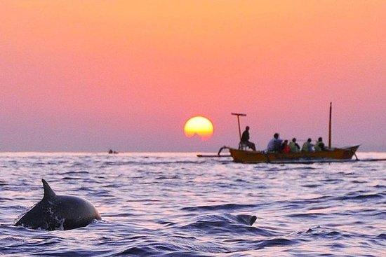 Lovina Sunrise Bali Dolphin Tour with...