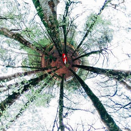 Vale of Glendalough, Ireland: Это раннехристианское поселение в Ирландии было основано Святым Кевином в 6 веке. На кельтском Глендалох означает «долина двух озер», путь к которым проходит через волшебный лес, скорее похожий на декорации голливудского фильма. Природа здесь просто невероятна, она «роскошно зелёная» как говорят местные благодаря тёплому Гольфстриму