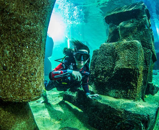 Lahinch, Ierland: Dive Academy is the first and only Dive Centre in Ireland to offer diving in an indoor Aquarium Tank. .