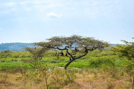 Magashi, Akegera National Park