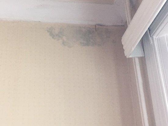 Damp on Ceiling