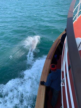 Glen Tarsan : Dolphins come along side