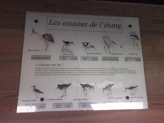 Etangs de Villepey Photo