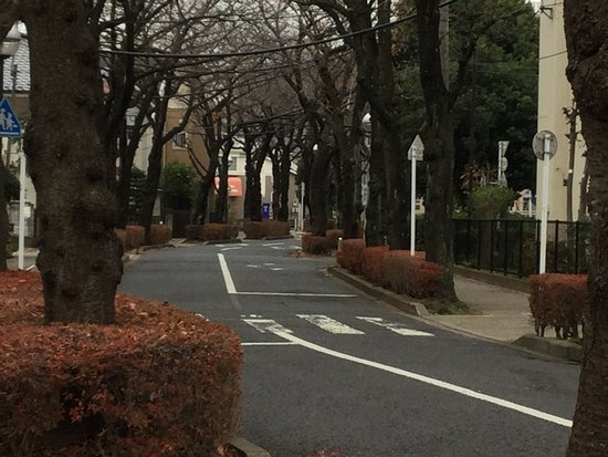 Kameari Sakura Street