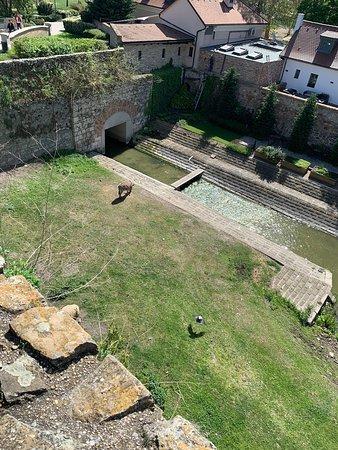 Tata Castle