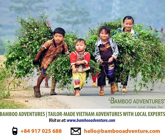 Bamboo Adventures