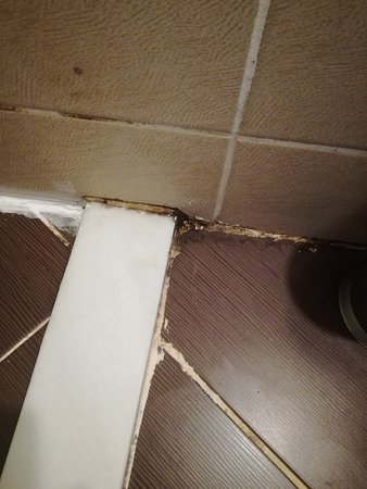 Mould in shower/ toilet space