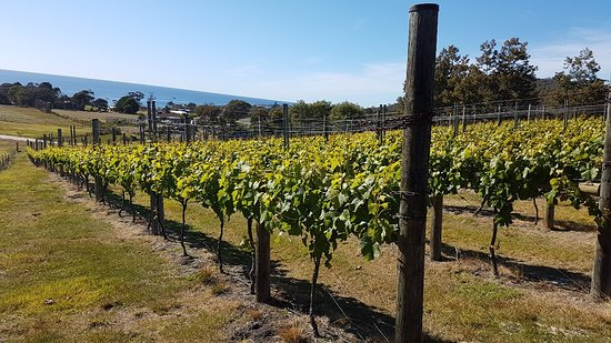 Overtime vineyard