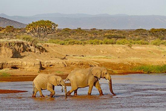 Samburu National Reserve, Kenya: Explore Africa in Style
