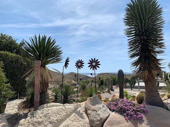 Cactus Nijar