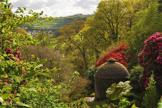 Calstock, UK: Cotehele gardens