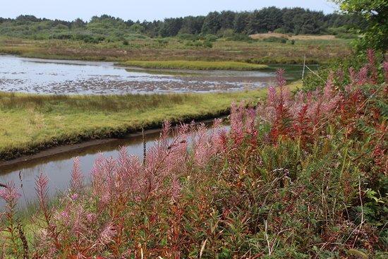 Sitka Sedge State Natural Area