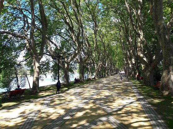 Avenida dos Plantanos