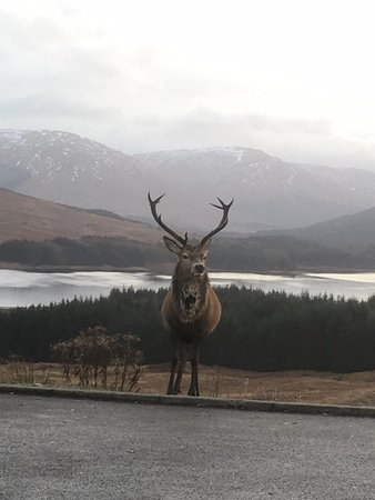 West Highland Wildlife Tours