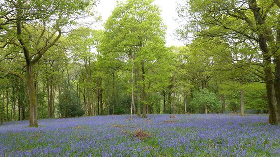 Wray, UK: Roeburndale Woods