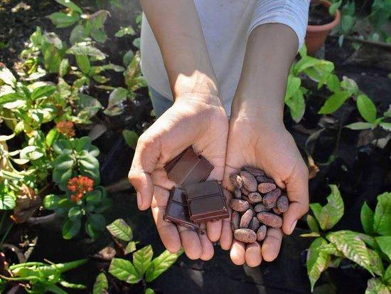 Taller de Cacao