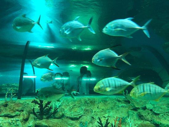 Ekaterinburg Aquarium