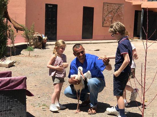 Msemrir, โมร็อกโก: Hamid et sa cigogne apprivoisée