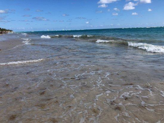 Average resort - so much seaweed.