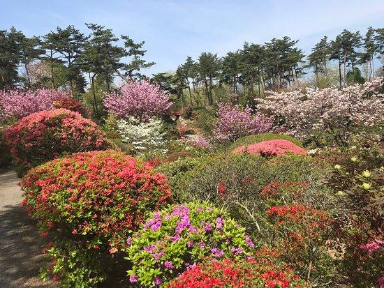 Okanbara Tsutsuji Garden