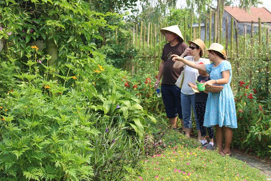 An Farm Hoi An: Visiting organic Farm and make traditional candy together