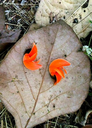 Palas flowers