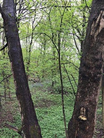 Chapeltown, UK: Park miejski- miły spacer po lesie .