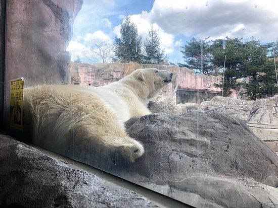 アクセスの良い動物園